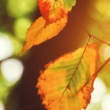 Herbstliches Sängerfest
